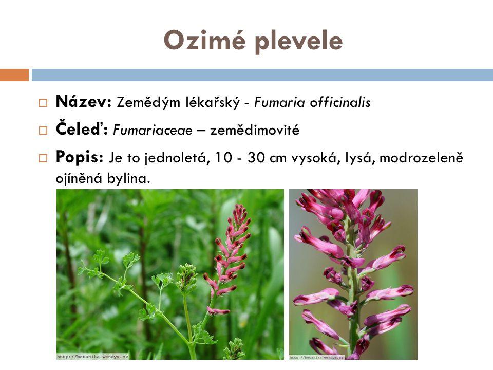Ozimé plevele  Název: Zemědým lékařský - Fumaria officinalis  Čeleď: Fumariaceae – zemědimovité  Popis: Je to jednoletá, 10 - 30 cm vysoká, lysá, modrozeleně ojíněná bylina.