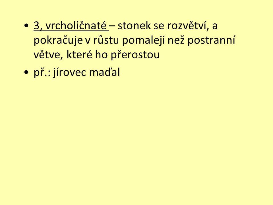 3, vrcholičnaté – stonek se rozvětví, a pokračuje v růstu pomaleji než postranní větve, které ho přerostou př.: jírovec maďal
