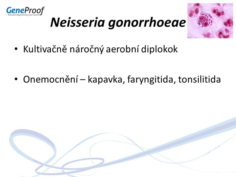 Neisseria gonorrhoeae Kultivačně náročný aerobní diplokok Onemocnění – kapavka, faryngitida, tonsilitida