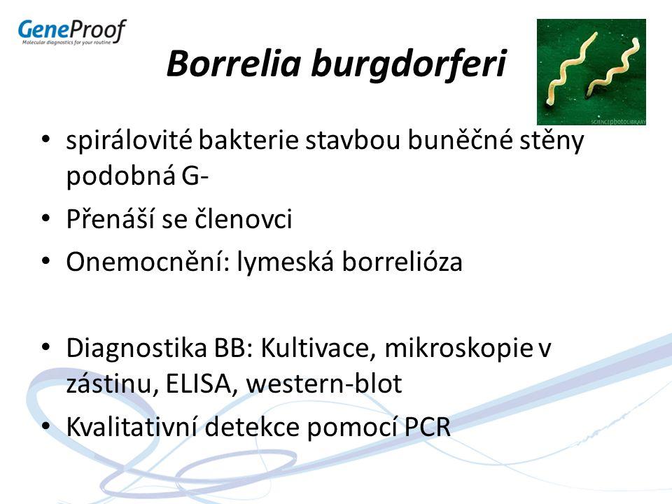 Borrelia burgdorferi spirálovité bakterie stavbou buněčné stěny podobná G- Přenáší se členovci Onemocnění: lymeská borrelióza Diagnostika BB: Kultivac