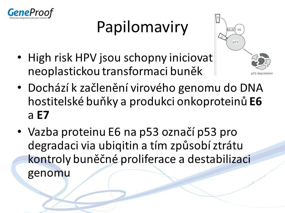 Papilomaviry High risk HPV jsou schopny iniciovat neoplastickou transformaci buněk Dochází k začlenění virového genomu do DNA hostitelské buňky a prod