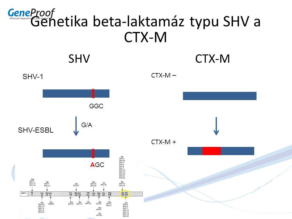 Genetika beta-laktamáz typu SHV a CTX-M SHVCTX-M CTX-M – CTX-M + SHV-1 SHV-ESBL GGC AGC G/A