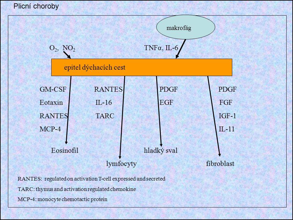 epitel dýchacích cest O 2, NO 2 TNFα, IL-6 makrofág GM-CSF RANTES PDGF PDGF Eotaxin IL-16 EGF FGF RANTES TARC IGF-1 MCP-4 IL-11 Eosinofil hladký sval