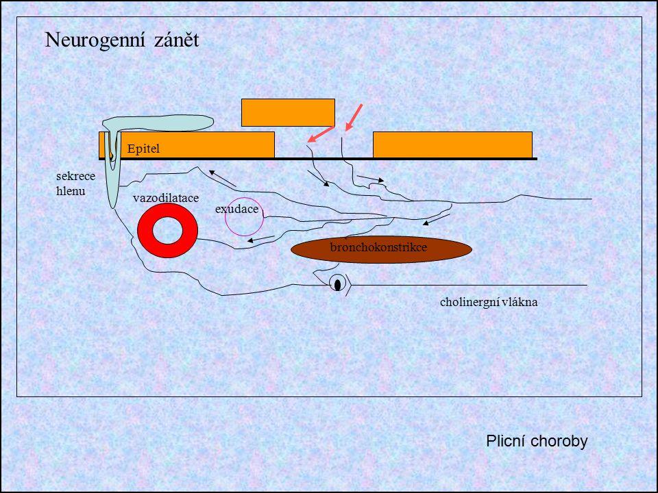 Neurogenní zánět Epitel sekrece hlenu vazodilatace exudace bronchokonstrikce cholinergní vlákna Plicní choroby