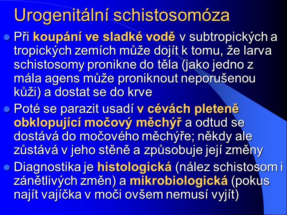Urogenitální schistosomóza Při koupání ve sladké vodě v subtropických a tropických zemích může dojít k tomu, že larva schistosomy pronikne do těla (jako jedno z mála agens může proniknout neporušenou kůži) a dostat se do krve Při koupání ve sladké vodě v subtropických a tropických zemích může dojít k tomu, že larva schistosomy pronikne do těla (jako jedno z mála agens může proniknout neporušenou kůži) a dostat se do krve Poté se parazit usadí v cévách pleteně obklopující močový měchýř a odtud se dostává do močového měchýře; někdy ale zůstává v jeho stěně a způsobuje její změny Poté se parazit usadí v cévách pleteně obklopující močový měchýř a odtud se dostává do močového měchýře; někdy ale zůstává v jeho stěně a způsobuje její změny Diagnostika je histologická (nález schistosom i zánětlivých změn) a mikrobiologická (pokus najít vajíčka v moči ovšem nemusí vyjít) Diagnostika je histologická (nález schistosom i zánětlivých změn) a mikrobiologická (pokus najít vajíčka v moči ovšem nemusí vyjít)