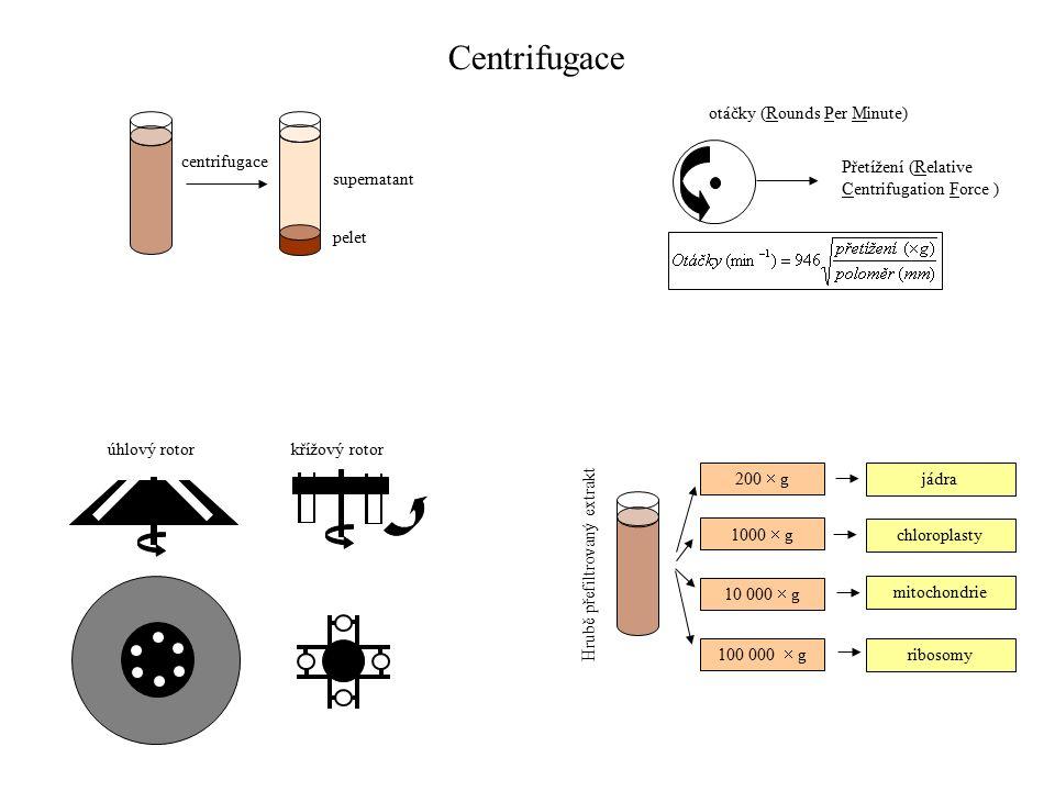 centrifugace supernatant pelet úhlový rotorkřížový rotor Přetížení (Relative Centrifugation Force ) otáčky (Rounds Per Minute) Hrubě přefiltrovaný extrakt 200  g 1000  g 10 000  g 100 000  g jádra chloroplasty mitochondrie ribosomy Centrifugace