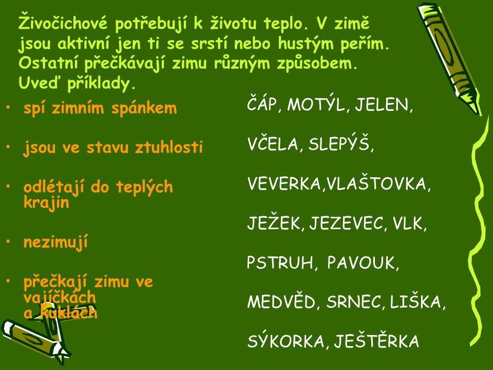 KonecKonec Mgr. Zdenka Zavičáková MŠ a ZŠ Valašské Meziříčí, Poličná