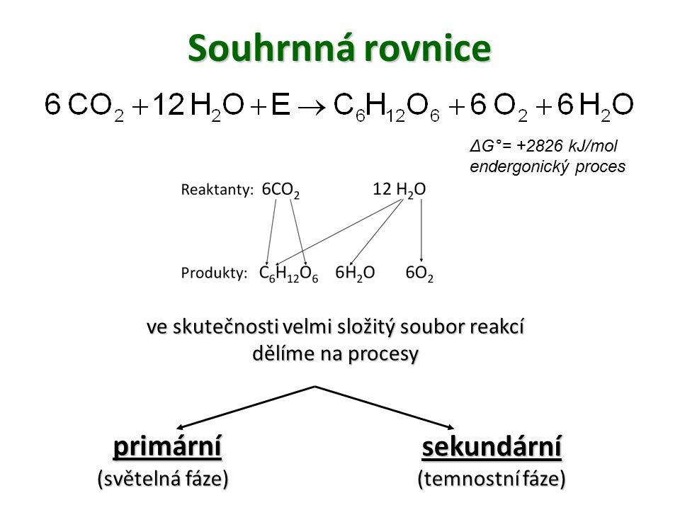 Souhrnná rovnice ve skutečnosti velmi složitý soubor reakcí dělíme na procesy primární sekundární (světelná fáze) (temnostní fáze) ΔG°= +2826 kJ/mol e