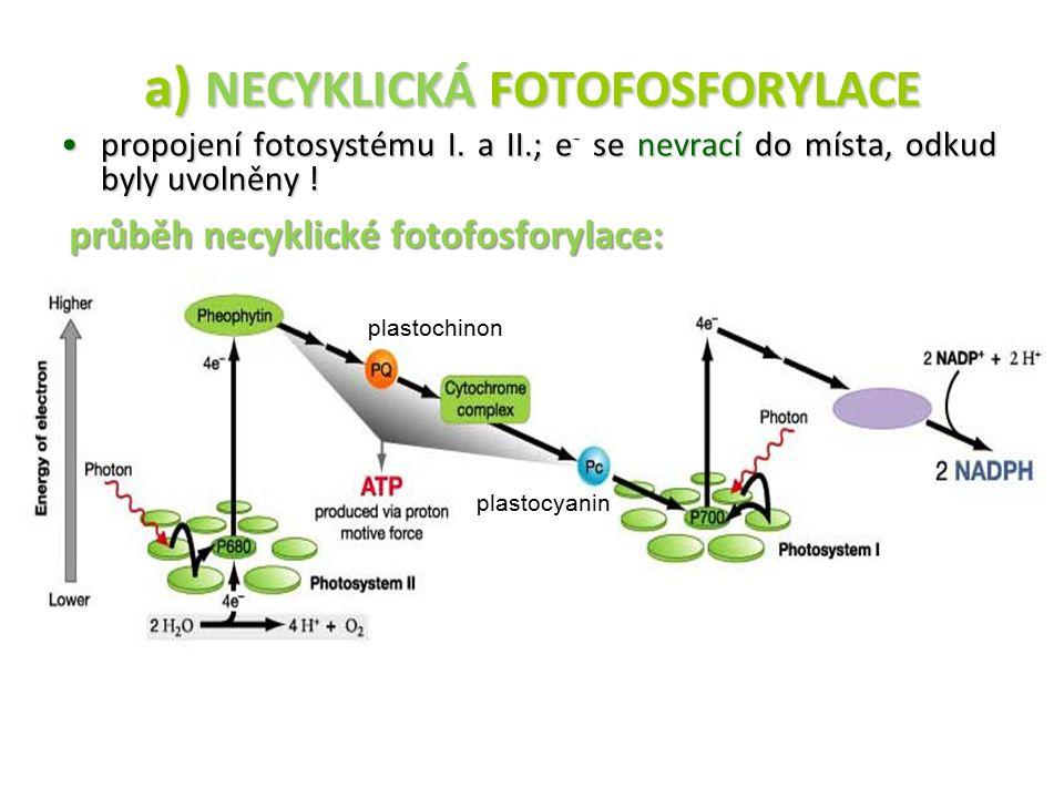 a) NECYKLICKÁ FOTOFOSFORYLACE propojení fotosystému I. a II.; e - se nevrací do místa, odkud byly uvolněny !propojení fotosystému I. a II.; e - se nev