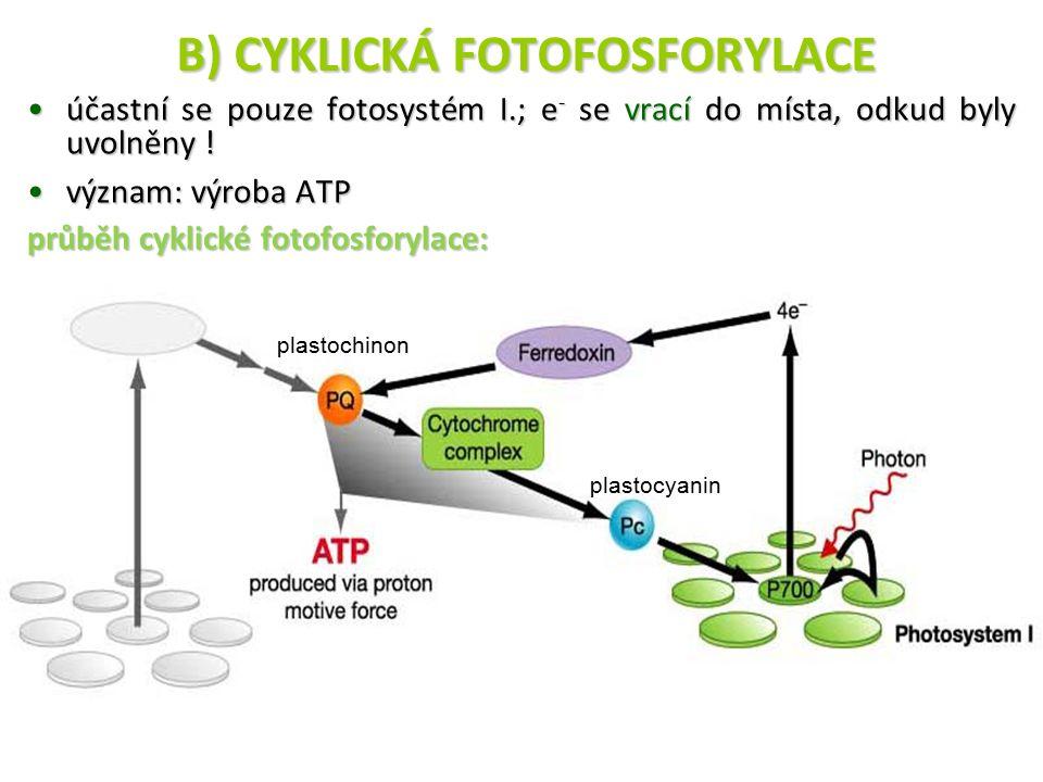 účastní se pouze fotosystém I.; e - se vrací do místa, odkud byly uvolněny !účastní se pouze fotosystém I.; e - se vrací do místa, odkud byly uvolněny