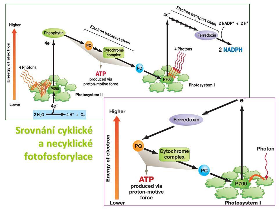Srovnání cyklické a necyklické fotofosforylace
