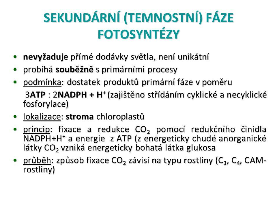 SEKUNDÁRNÍ (TEMNOSTNÍ) FÁZE FOTOSYNTÉZY nevyžaduje přímé dodávky světla, není unikátnínevyžaduje přímé dodávky světla, není unikátní probíhá souběžně s primárními procesyprobíhá souběžně s primárními procesy podmínka: dostatek produktů primární fáze v poměrupodmínka: dostatek produktů primární fáze v poměru 3ATP : 2NADPH + H + (zajištěno střídáním cyklické a necyklické fosforylace) 3ATP : 2NADPH + H + (zajištěno střídáním cyklické a necyklické fosforylace) lokalizace: stroma chloroplastůlokalizace: stroma chloroplastů princip: fixace a redukce CO 2 pomocí redukčního činidla NADPH+H + a energie z ATP (z energeticky chudé anorganické látky CO 2 vzniká energeticky bohatá látka glukosaprincip: fixace a redukce CO 2 pomocí redukčního činidla NADPH+H + a energie z ATP (z energeticky chudé anorganické látky CO 2 vzniká energeticky bohatá látka glukosa průběh: způsob fixace CO 2 závisí na typu rostliny (C 3, C 4, CAM- rostliny)průběh: způsob fixace CO 2 závisí na typu rostliny (C 3, C 4, CAM- rostliny)