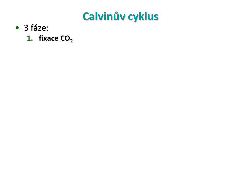 Calvinův cyklus 3 fáze:3 fáze: 1.fixace CO 2