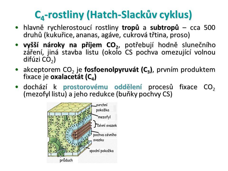C 4 -rostliny (Hatch-Slackův cyklus) hlavně rychlerostoucí rostliny tropů a subtropů – cca 500 druhů (kukuřice, ananas, agáve, cukrová třtina, proso)hlavně rychlerostoucí rostliny tropů a subtropů – cca 500 druhů (kukuřice, ananas, agáve, cukrová třtina, proso) vyšší nároky na příjem CO 2, potřebují hodně slunečního záření, jiná stavba listu (okolo CS pochva omezující volnou difúzi CO 2 )vyšší nároky na příjem CO 2, potřebují hodně slunečního záření, jiná stavba listu (okolo CS pochva omezující volnou difúzi CO 2 ) akceptorem CO 2 je fosfoenolpyruvát (C 3 ), prvním produktem fixace je oxalacetát (C 4 )akceptorem CO 2 je fosfoenolpyruvát (C 3 ), prvním produktem fixace je oxalacetát (C 4 ) dochází k prostorovému oddělení procesů fixace CO 2 (mezofyl listu) a jeho redukce (buňky pochvy CS)dochází k prostorovému oddělení procesů fixace CO 2 (mezofyl listu) a jeho redukce (buňky pochvy CS)