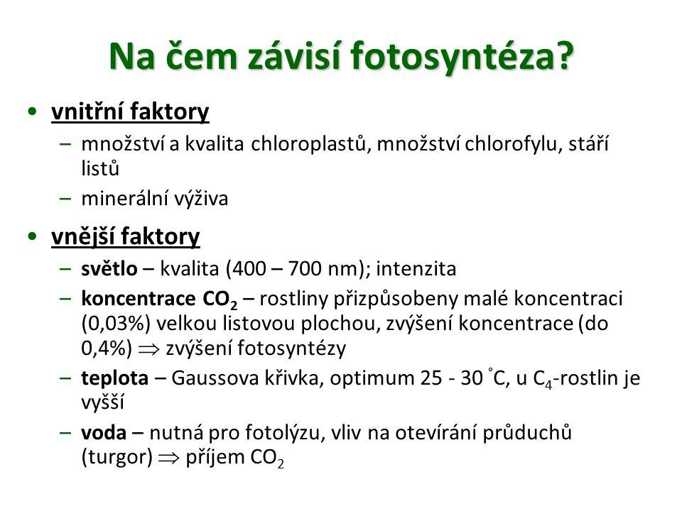 Na čem závisí fotosyntéza? vnitřní faktory –množství a kvalita chloroplastů, množství chlorofylu, stáří listů –minerální výživa vnější faktory –světlo