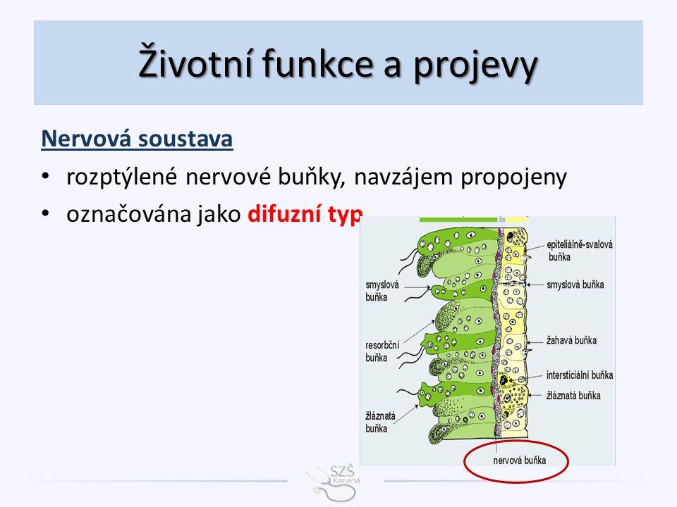 Nervová soustava rozptýlené nervové buňky, navzájem propojeny označována jako difuzní typ Životní funkce a projevy