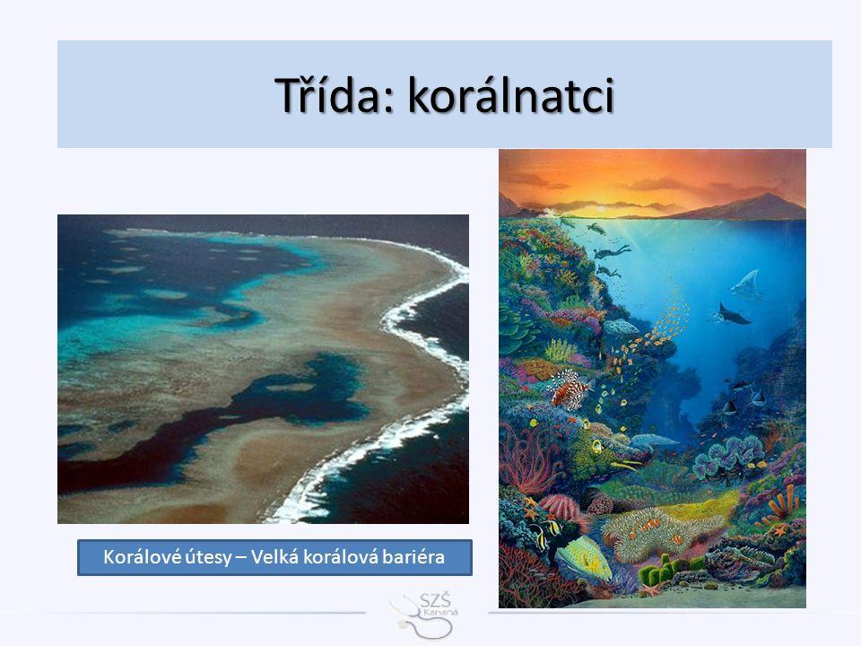 Třída: korálnatci Korálové útesy – Velká korálová bariéra