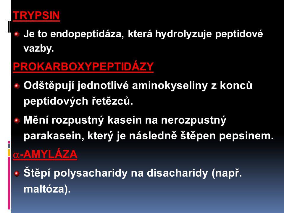 TRYPSIN Je to endopeptidáza, která hydrolyzuje peptidové vazby.