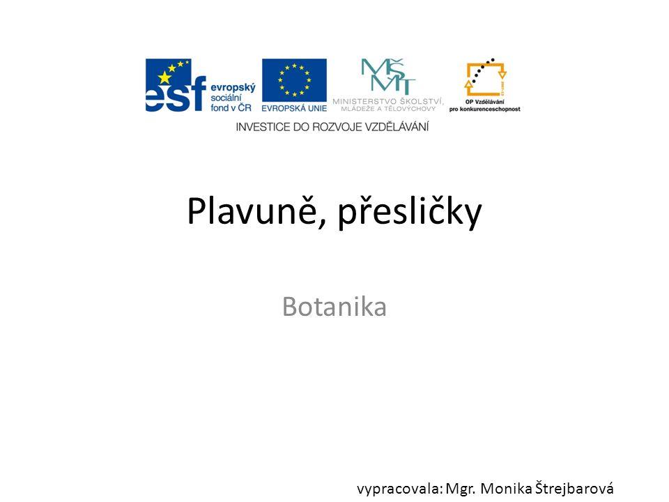 Plavuně, přesličky Botanika vypracovala: Mgr. Monika Štrejbarová