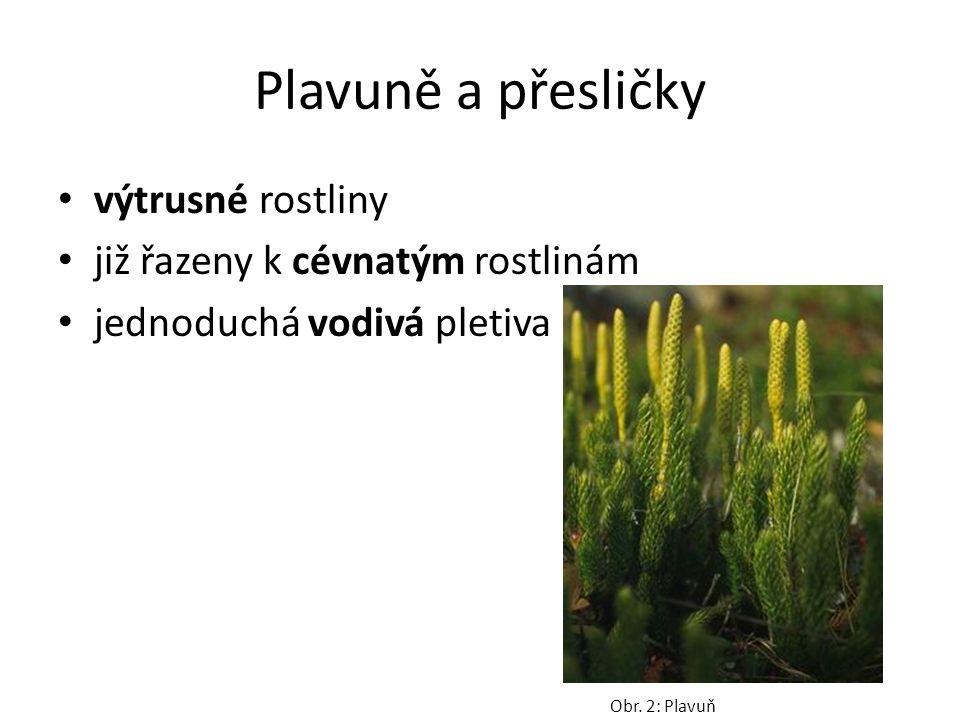 Plavuně a přesličky výtrusné rostliny již řazeny k cévnatým rostlinám jednoduchá vodivá pletiva Obr.