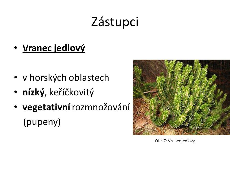 Zástupci Vranec jedlový v horských oblastech nízký, keříčkovitý vegetativní rozmnožování (pupeny) Obr.