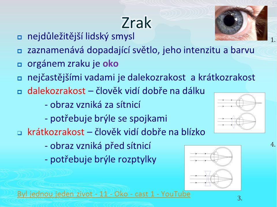  nejdůležitější lidský smysl  zaznamenává dopadající světlo, jeho intenzitu a barvu  orgánem zraku je oko  nejčastějšími vadami je dalekozrakost a krátkozrakost  dalekozrakost – člověk vidí dobře na dálku - obraz vzniká za sítnicí - potřebuje brýle se spojkami  krátkozrakost – člověk vidí dobře na blízko - obraz vzniká před sítnicí - potřebuje brýle rozptylky Byl jednou jeden zivot - 11 - Oko - cast 1 - YouTube 1.
