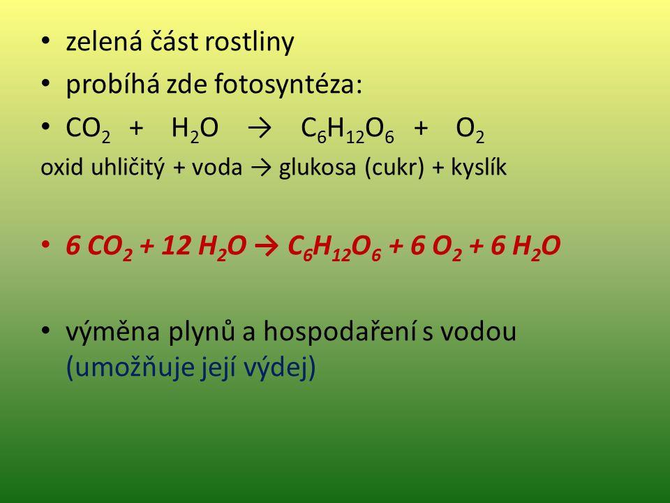 zelená část rostliny probíhá zde fotosyntéza: CO 2 + H 2 O → C 6 H 12 O 6 + O 2 oxid uhličitý + voda → glukosa (cukr) + kyslík 6 CO 2 + 12 H 2 O → C 6 H 12 O 6 + 6 O 2 + 6 H 2 O výměna plynů a hospodaření s vodou (umožňuje její výdej)