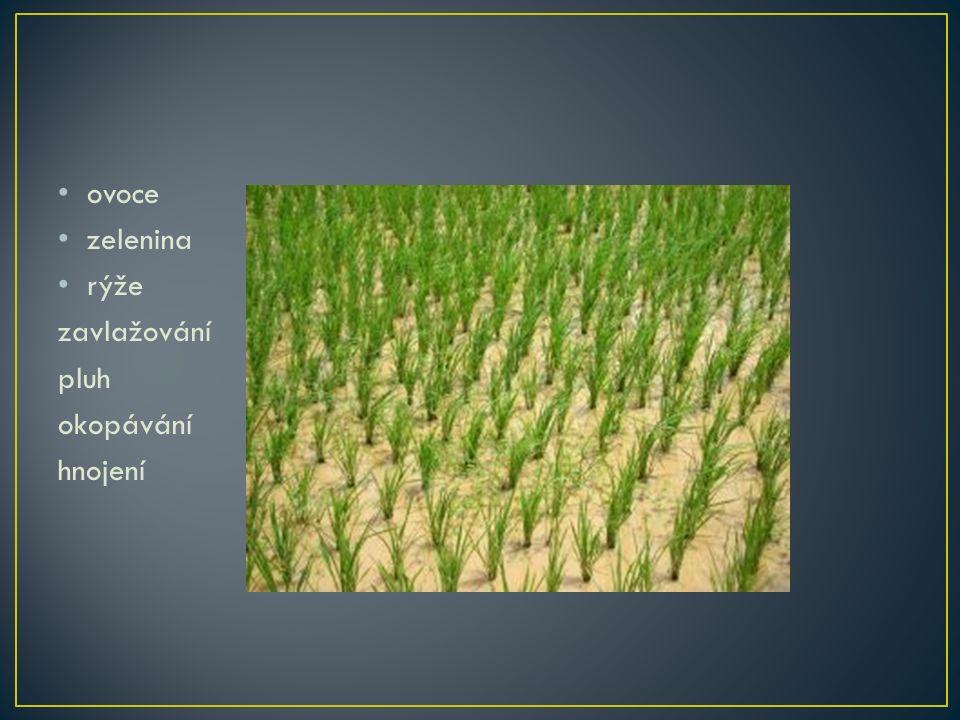 ovoce zelenina rýže zavlažování pluh okopávání hnojení