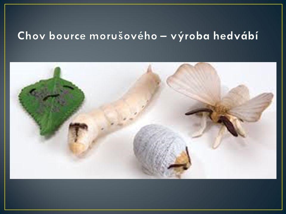 housenka se živí listy bource morušového z pevného tenkého vlákna si vytvoří kuklu –kokon pokud se kukla hodí do vroucí vody, dá se opět rozmotat na vlákno dlouhé až několik tisíc metrů z vlákna se upřede nit