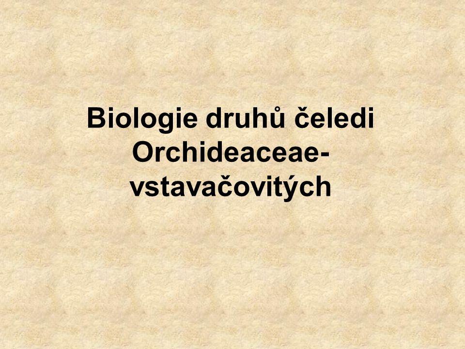 Stavba těla rostliny –zelené, nezelené (endotrofní mykorrhiza) –epifytické, terestrické lodyhy –popínavé, plazivé, vzpřímené –listnaté, bezlisté oddenky (s kořeny, bez kořenů), hlízy