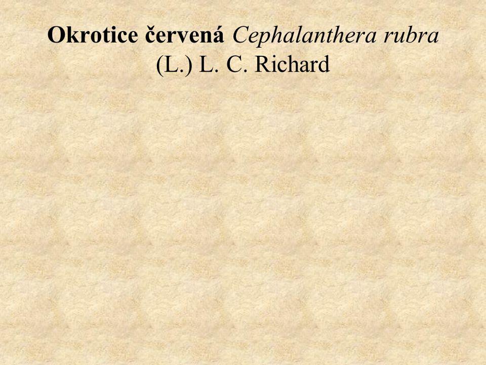 Okrotice červená Cephalanthera rubra (L.) L. C. Richard