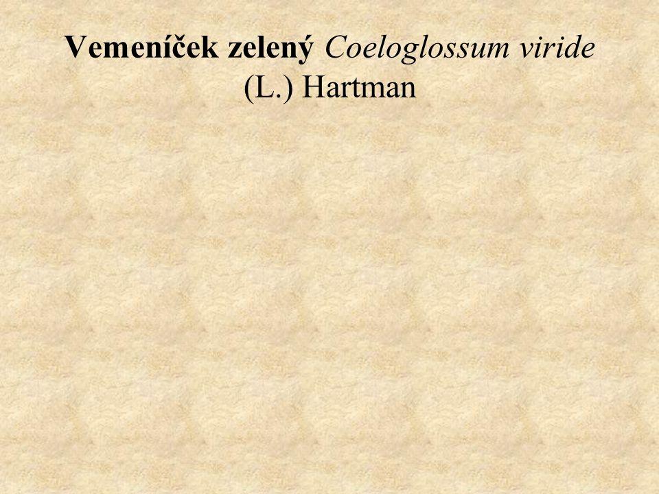 Vemeníček zelený Coeloglossum viride (L.) Hartman