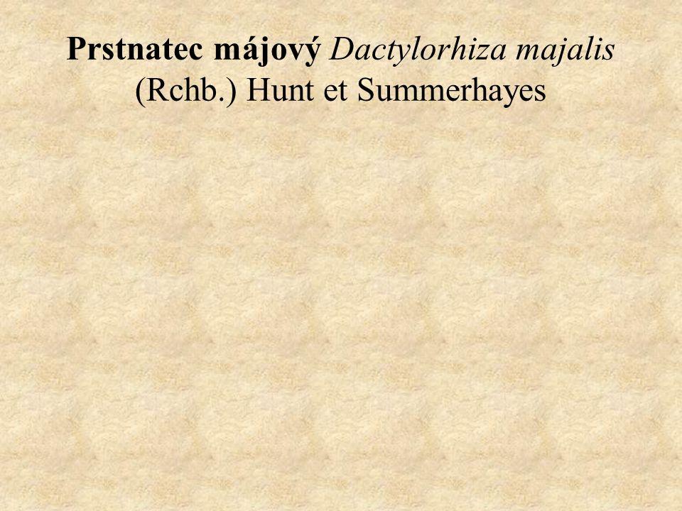 Prstnatec májový Dactylorhiza majalis (Rchb.) Hunt et Summerhayes