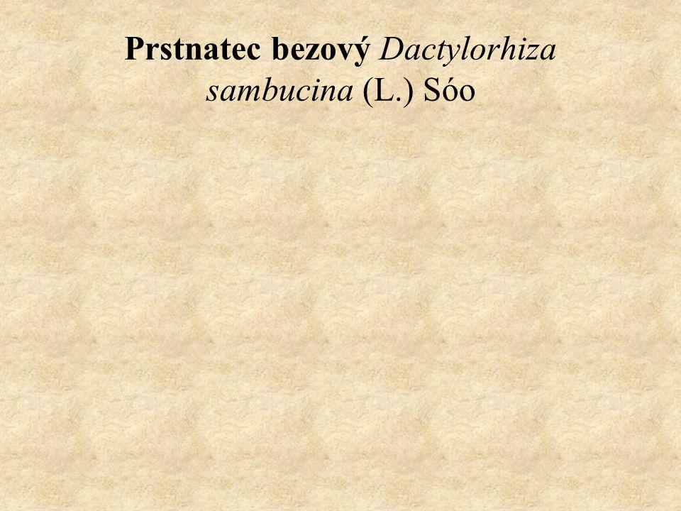 Prstnatec bezový Dactylorhiza sambucina (L.) Sóo