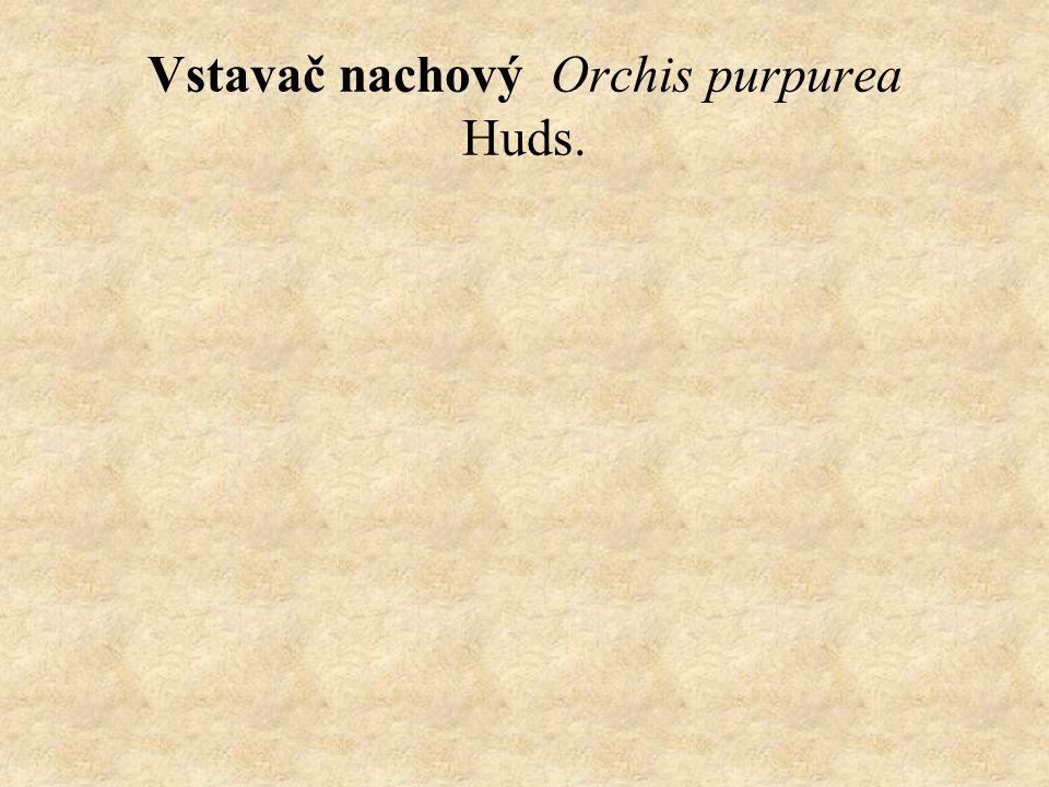 Vstavač nachový Orchis purpurea Huds.