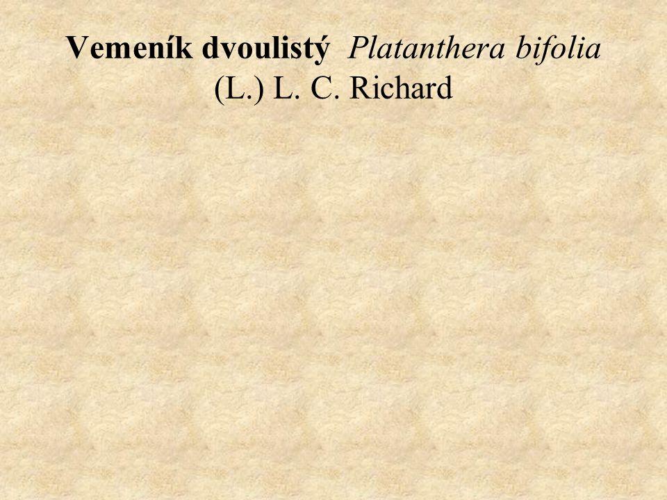 Vemeník dvoulistý Platanthera bifolia (L.) L. C. Richard