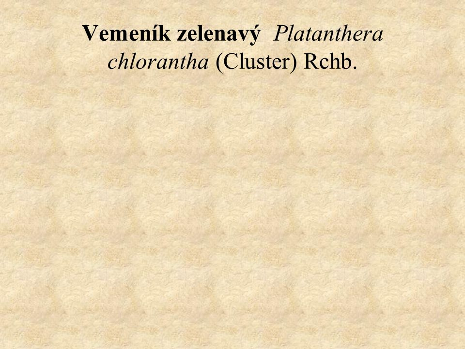 Vemeník zelenavý Platanthera chlorantha (Cluster) Rchb.