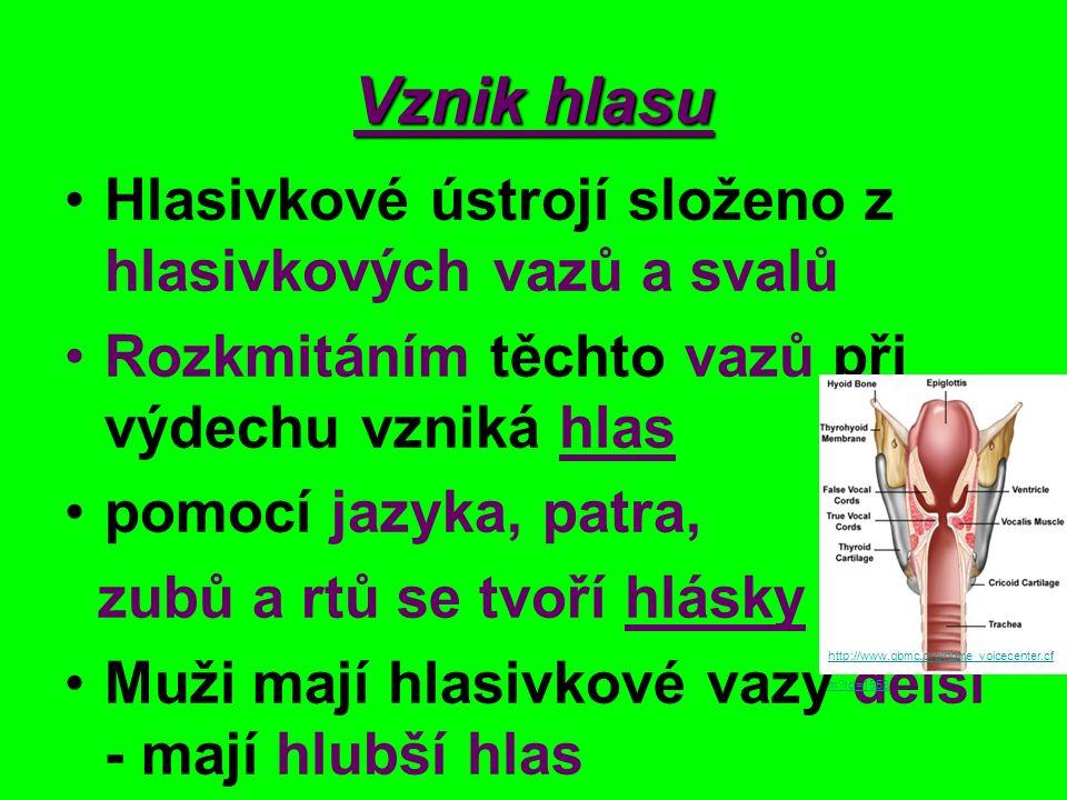 Dolní cesty dýchací http://www.srom.hranet.cz/projekty/2007/nehybovasona/d.cesty%20dych.htm