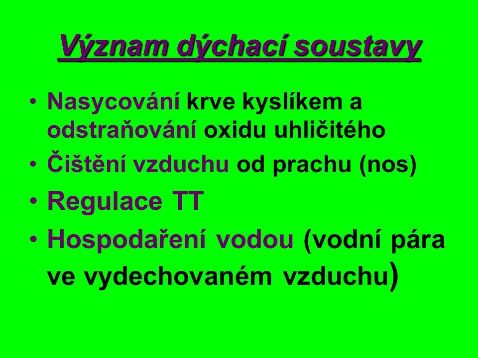 c/ 2 průdušky Zanořují se do L a P plíce stěny vyztuženy chrupavkami Sliznice s řasinkami http://www.helago-cz.cz/product/gs-5-hrtan-a-prudusnice