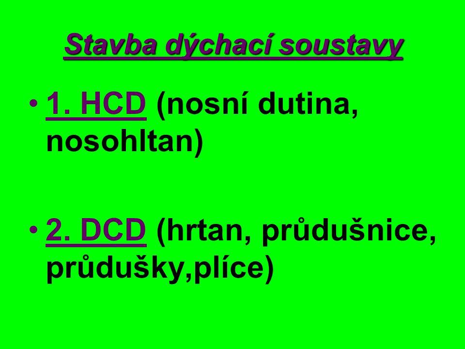 Stavba dýchací soustavy 1. HCD (nosní dutina, nosohltan) 2. DCD (hrtan, průdušnice, průdušky,plíce)