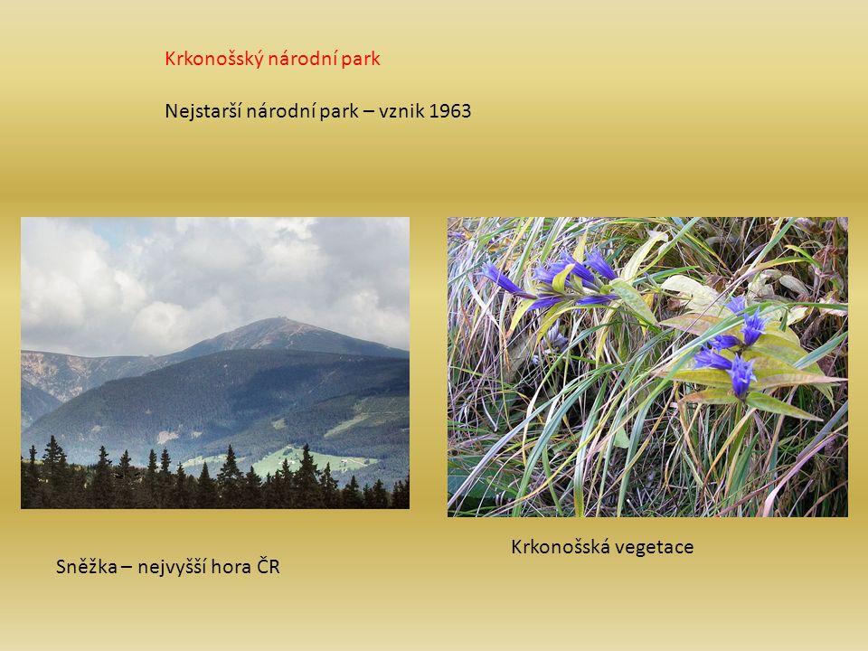 Krkonošský národní park Nejstarší národní park – vznik 1963 Sněžka – nejvyšší hora ČR Krkonošská vegetace