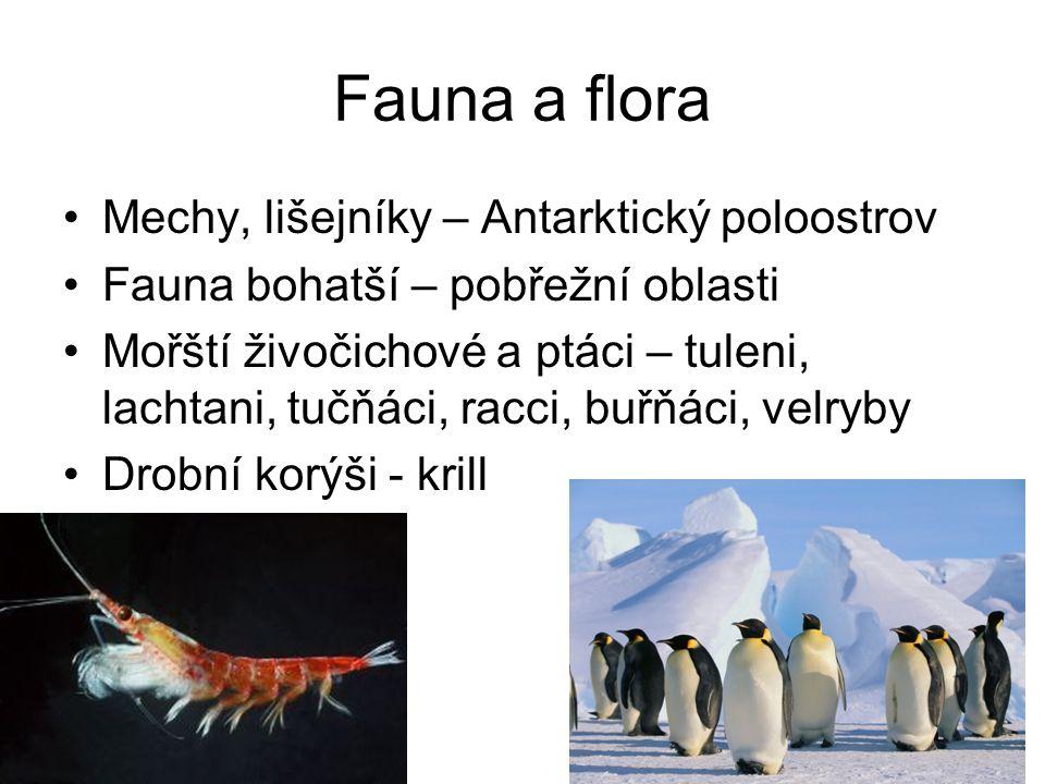Fauna a flora Mechy, lišejníky – Antarktický poloostrov Fauna bohatší – pobřežní oblasti Mořští živočichové a ptáci – tuleni, lachtani, tučňáci, racci, buřňáci, velryby Drobní korýši - krill