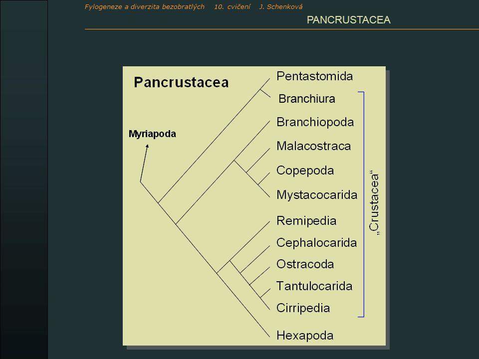 PANCRUSTACEA Branchiura Fylogeneze a diverzita bezobratlých 10. cvičení J. Schenková