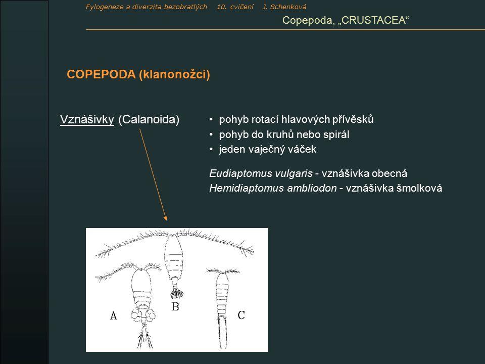 """COPEPODA (klanonožci) Vznášivky (Calanoida) pohyb rotací hlavových přívěsků pohyb do kruhů nebo spirál jeden vaječný váček Eudiaptomus vulgaris - vznášivka obecná Hemidiaptomus ambliodon - vznášivka šmolková Copepoda, """"CRUSTACEA Fylogeneze a diverzita bezobratlých 10."""