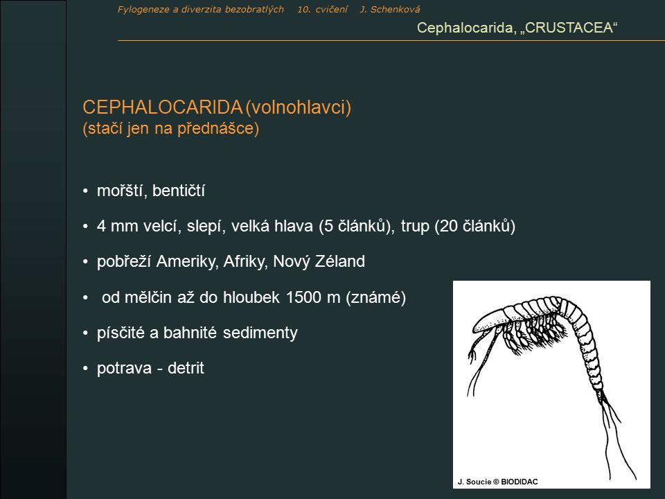 """CEPHALOCARIDA (volnohlavci) (stačí jen na přednášce) mořští, bentičtí 4 mm velcí, slepí, velká hlava (5 článků), trup (20 článků) pobřeží Ameriky, Afriky, Nový Zéland od mělčin až do hloubek 1500 m (známé) písčité a bahnité sedimenty potrava - detrit Cephalocarida, """"CRUSTACEA Fylogeneze a diverzita bezobratlých 10."""