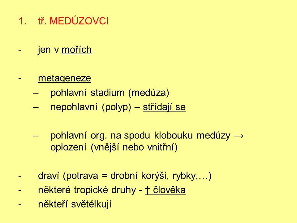 Vývojový cyklus medúzovců Obr.