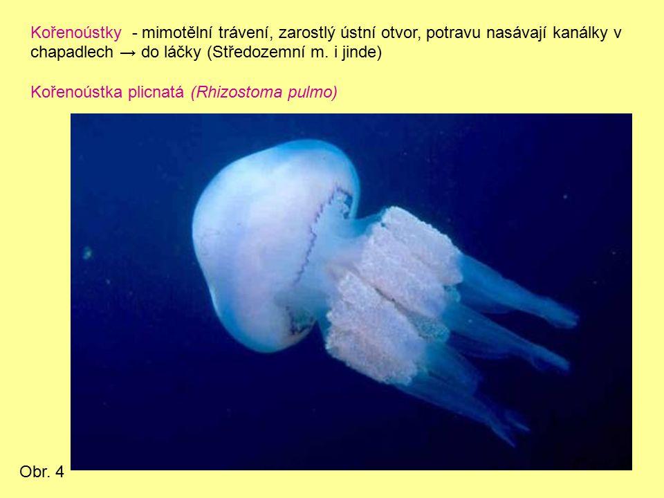 4.třída: KORÁLNATCI -moře -nemají stadium medúzy -polyp – láčka rozdělená 6 n.