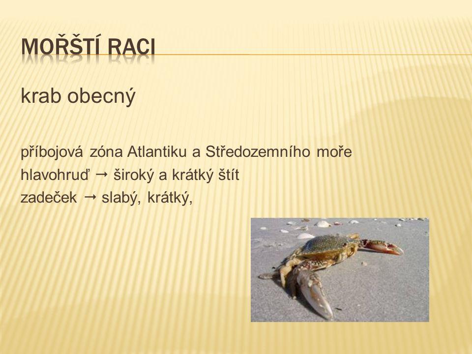 krab obecný příbojová zóna Atlantiku a Středozemního moře hlavohruď  široký a krátký štít zadeček  slabý, krátký,