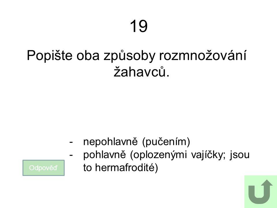 19 Popište oba způsoby rozmnožování žahavců. Odpověď -nepohlavně (pučením) -pohlavně (oplozenými vajíčky; jsou to hermafrodité)