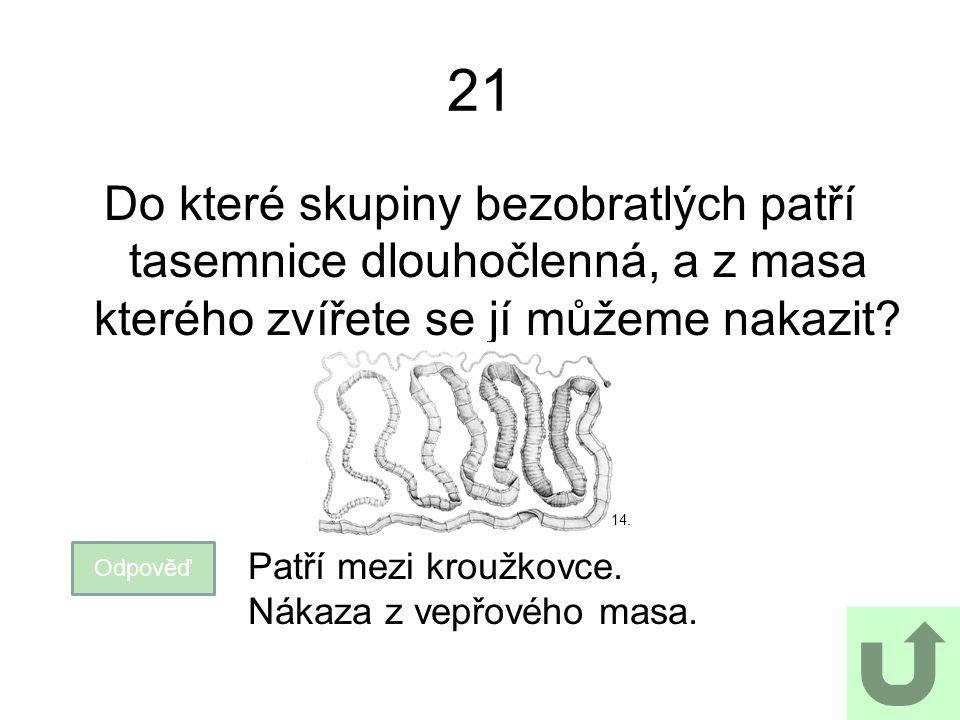 21 Do které skupiny bezobratlých patří tasemnice dlouhočlenná, a z masa kterého zvířete se jí můžeme nakazit? Odpověď Patří mezi kroužkovce. Nákaza z